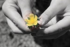 Aidan-Flower